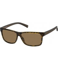 Polaroid Mens pld2027-s m31 ig Havana Brown polarized aurinkolasit